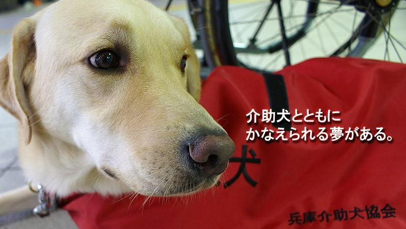 介助犬協会